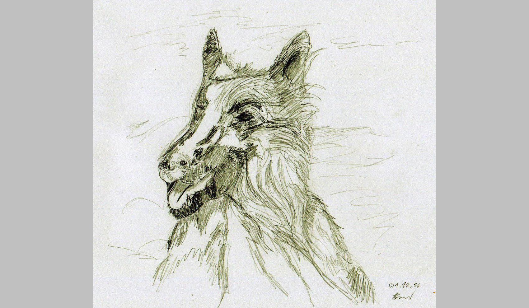 Hund (01.12.16 - 1, 21 x 29,7 cm, A4)