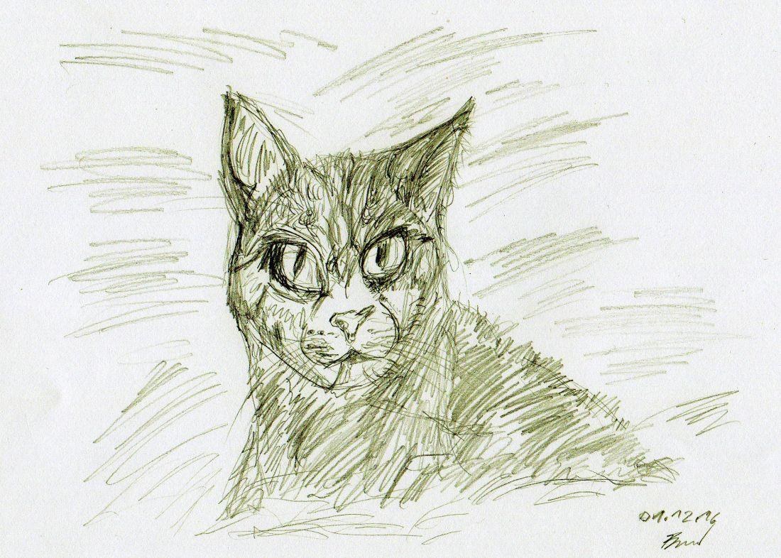 Katze (01.12.16 - 2, 21 x 29,7 cm, A4)