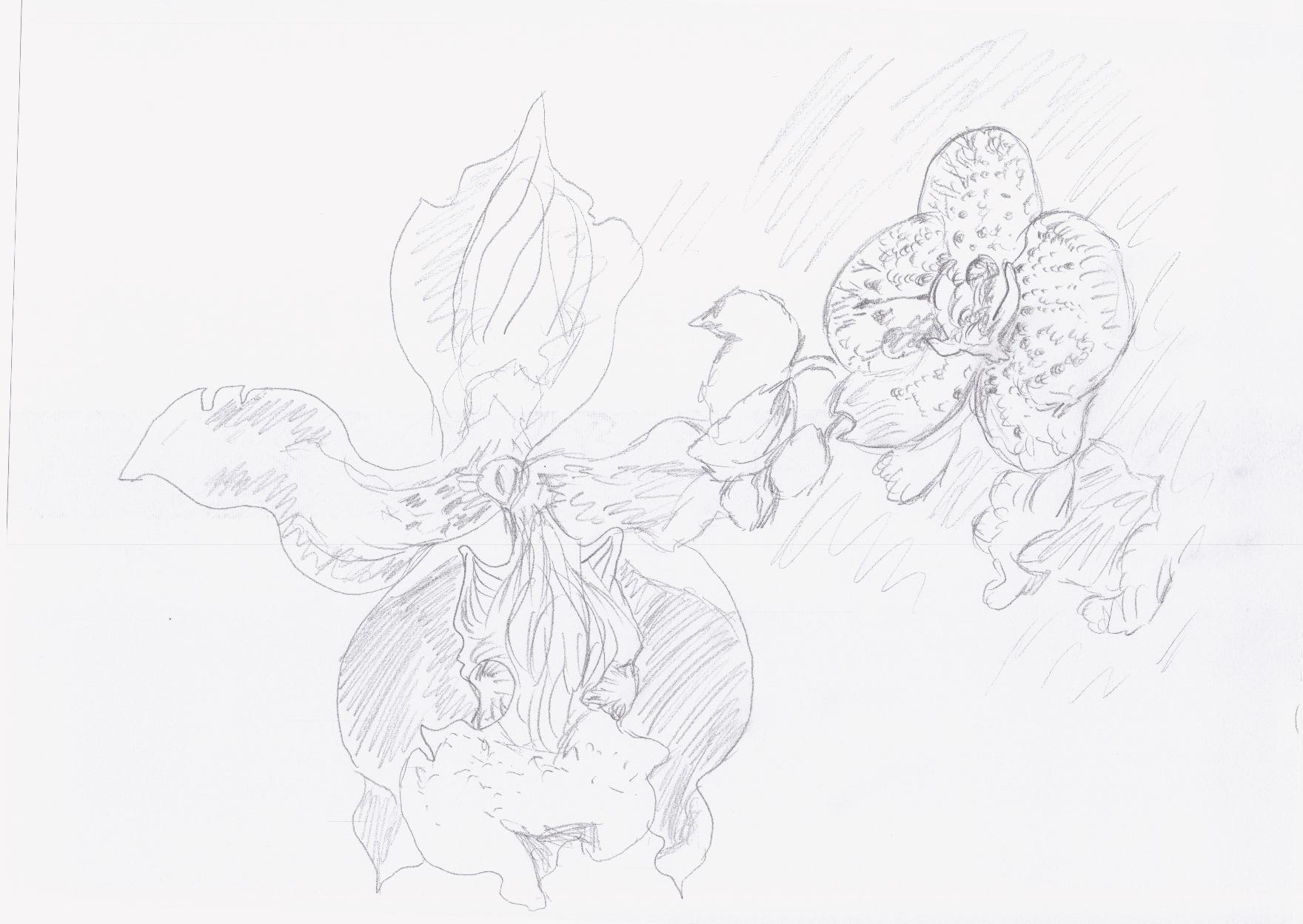 Orchidee, Skizze (2013, 21 x 29,7 cm, A4)