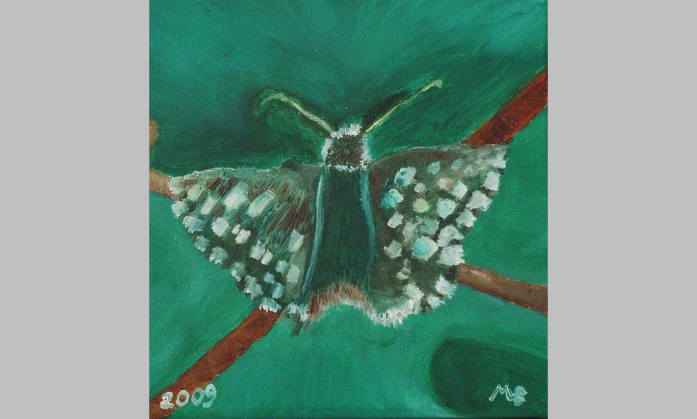 Malven-Würfelfleckfalter (2009, 15 x 15 cm)